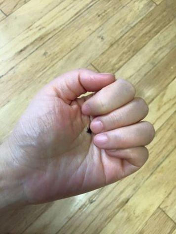 hand point 1